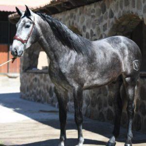 Carmel, HORSE