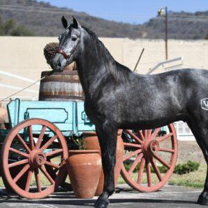 Cantador, HORSE